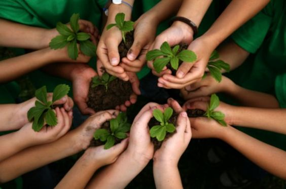 Green Lessons Plans and Resources – Forever Curious